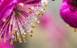 Λουλούδι στη δροσιά Στοκ φωτογραφία με δικαίωμα ελεύθερης χρήσης