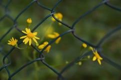 Λουλούδι στη φυλακή Στοκ Εικόνα