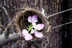 Λουλούδι στη φωλιά πουλιών Στοκ Εικόνα