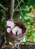 Λουλούδι στη φωλιά πουλιών Στοκ φωτογραφία με δικαίωμα ελεύθερης χρήσης