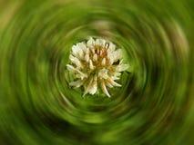 Λουλούδι στη χλόη Στοκ φωτογραφίες με δικαίωμα ελεύθερης χρήσης