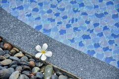 Λουλούδι στις πέτρες στην άκρη της πισίνας Στοκ εικόνα με δικαίωμα ελεύθερης χρήσης