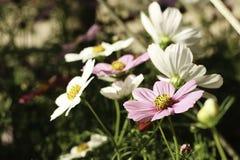 Λουλούδι στον κήπο Στοκ Φωτογραφίες