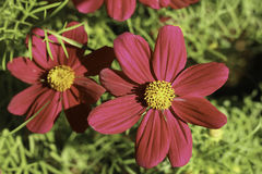 Λουλούδι στον κήπο Στοκ Φωτογραφία