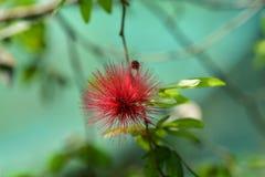 Λουλούδι στον κήπο Στοκ φωτογραφία με δικαίωμα ελεύθερης χρήσης