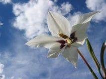 Λουλούδι στον ουρανό Στοκ Εικόνες