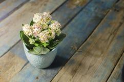 Λουλούδι στον παλαιό πίνακα Στοκ Φωτογραφία