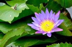 Λουλούδι στον ταϊλανδικό ναό Στοκ φωτογραφίες με δικαίωμα ελεύθερης χρήσης
