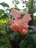 Λουλούδι στο αγρόκτημα Στοκ Εικόνες