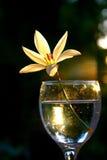 Λουλούδι στο γυαλί Στοκ εικόνες με δικαίωμα ελεύθερης χρήσης