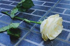 Λουλούδι στο μαύρο πάτωμα Στοκ Φωτογραφία