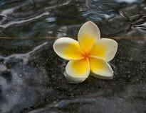 Λουλούδι στο νερό Στοκ φωτογραφίες με δικαίωμα ελεύθερης χρήσης