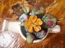 Λουλούδι στο δοχείο στον ξύλινο πίνακα Στοκ Φωτογραφία