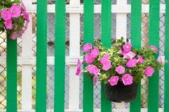 Λουλούδι στο δοχείο στον ξύλινο φράκτη Στοκ Φωτογραφία