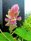 Λουλούδι στο πάρκο Hort Στοκ φωτογραφία με δικαίωμα ελεύθερης χρήσης