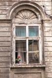 Λουλούδι στο παράθυρο στοκ εικόνα με δικαίωμα ελεύθερης χρήσης