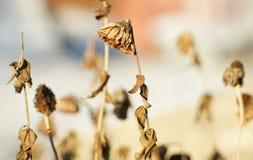 Λουλούδι στο σπίτι Στοκ Εικόνες