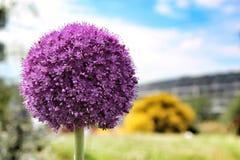 Λουλούδι στο τέλος μιλι'ου ανθών Στοκ εικόνα με δικαίωμα ελεύθερης χρήσης
