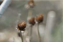 Λουλούδι στο τέλος του Στοκ Φωτογραφίες
