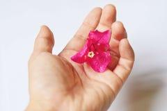 Λουλούδι στο χέρι Στοκ Φωτογραφίες