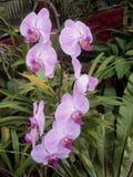 Λουλούδι στο orkid στοκ εικόνα