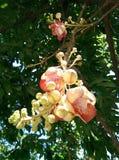 Λουλούδι σφαιρών της Canon Στοκ φωτογραφία με δικαίωμα ελεύθερης χρήσης