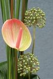 Λουλούδι σύνθεσης, Anthurium Anthurium Schott και Allium σκόρδου Στοκ Φωτογραφίες