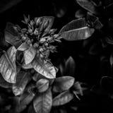 Λουλούδι τέχνης Στοκ Εικόνα