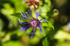 Λουλούδι την άνοιξη Στοκ Εικόνες