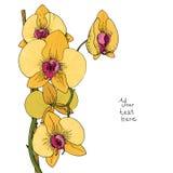 Λουλούδι της κίτρινης ορχιδέας Στοκ Φωτογραφία