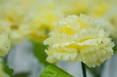 Λουλούδι της Κορέας Στοκ φωτογραφίες με δικαίωμα ελεύθερης χρήσης