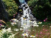 Λουλούδι της Camille κινηματογραφήσεων σε πρώτο πλάνο στα αλπικά βουνά της Ελβετίας, Unterstock, Urbachtal Στοκ Εικόνα