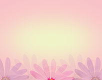 Λουλούδι της Daisy στο μαλακό γλυκό υπόβαθρο χρώματος και σύστασης ύφους θαμπάδων Στοκ Φωτογραφία