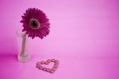 Λουλούδι της Daisy στοκ φωτογραφία με δικαίωμα ελεύθερης χρήσης