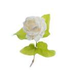 Λουλούδι της Jasmine (για Mather ημέρα Ταϊλάνδη) Στοκ εικόνες με δικαίωμα ελεύθερης χρήσης