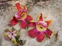 Λουλούδι της Sara Στοκ Φωτογραφίες