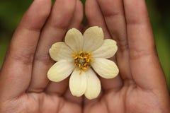 Λουλούδι της Zinnia σε διαθεσιμότητα Στοκ εικόνα με δικαίωμα ελεύθερης χρήσης