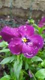 Λουλούδι τη βροχερή ημέρα Στοκ εικόνα με δικαίωμα ελεύθερης χρήσης