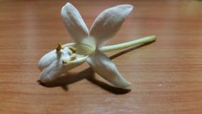 Λουλούδι τιτιβίσματος Στοκ Εικόνες