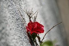 Λουλούδι τοίχων Στοκ Εικόνα