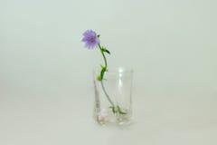 Λουλούδι τομέων σε ένα μπλε υπόβαθρο Στοκ εικόνες με δικαίωμα ελεύθερης χρήσης