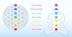 Λουλούδι του ατόμου Chakras περιγραφής ζωής διανυσματική απεικόνιση