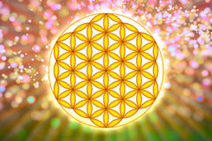 Λουλούδι του ζωντανού συμβόλου - ιερή γεωμετρία ελεύθερη απεικόνιση δικαιώματος