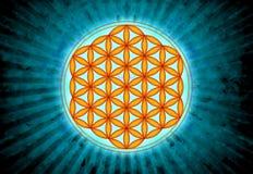 Λουλούδι του ζωντανού συμβόλου - ιερή γεωμετρία Απεικόνιση αποθεμάτων