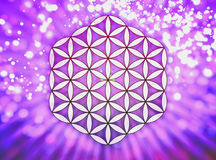 Λουλούδι του ζωντανού συμβόλου - ιερή γεωμετρία Διανυσματική απεικόνιση