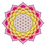 Λουλούδι του ζωντανού Lotus Στοκ εικόνες με δικαίωμα ελεύθερης χρήσης
