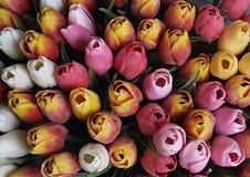 Λουλούδι τουλιπών Στοκ εικόνες με δικαίωμα ελεύθερης χρήσης