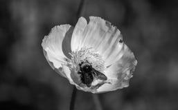 Λουλούδι του Σαν Φρανσίσκο στο πάρκο Στοκ εικόνα με δικαίωμα ελεύθερης χρήσης