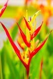 Λουλούδι το καλοκαίρι Στοκ φωτογραφία με δικαίωμα ελεύθερης χρήσης