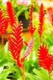 Λουλούδι το καλοκαίρι Στοκ εικόνα με δικαίωμα ελεύθερης χρήσης